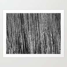 Toothpicks Art Print