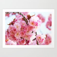 Cherry Blossom dream Art Print