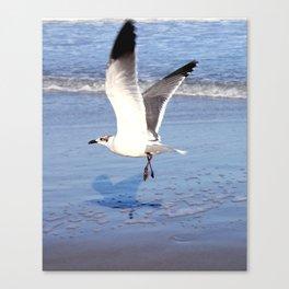 Sea Gull at the Beach Canvas Print
