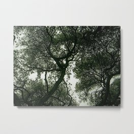 Oaks in Dusk Metal Print
