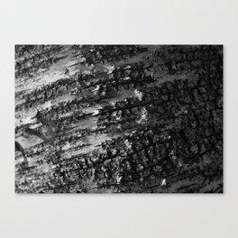 Rough Birch Bark Canvas Print