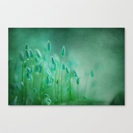 green microcosmos Canvas Print