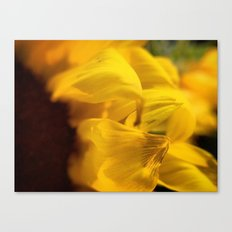 Sunflower Macro 2 Canvas Print