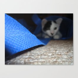 Cat's Back in the Bag Canvas Print