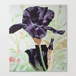 Black Iris Canvas Print