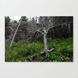 Forest Spirit (Full image skull and trunk)  Canvas Print