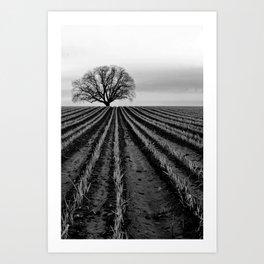 leading lines Art Print