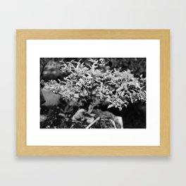 Bonsai 2 Framed Art Print
