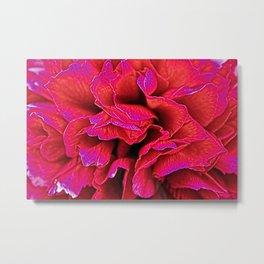 Peony flower  Metal Print