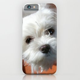 Cute Maltese asking for a treat iPhone Case