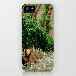 gracie in the vineyard iPhone Case