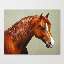 Chestnut Morgan Horse Canvas Print