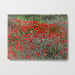 Beautiful Red Wild Anemone Flowers In A Spring Field  Metal Print