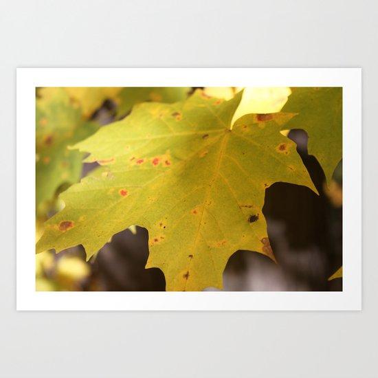 fall leave Art Print