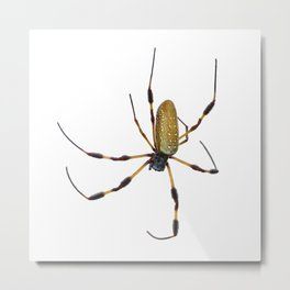 Golden Silk (Banana) Spider isolated on white background Metal Print