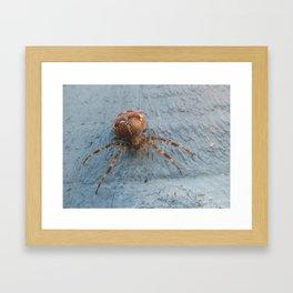 House Spider Framed Art Print
