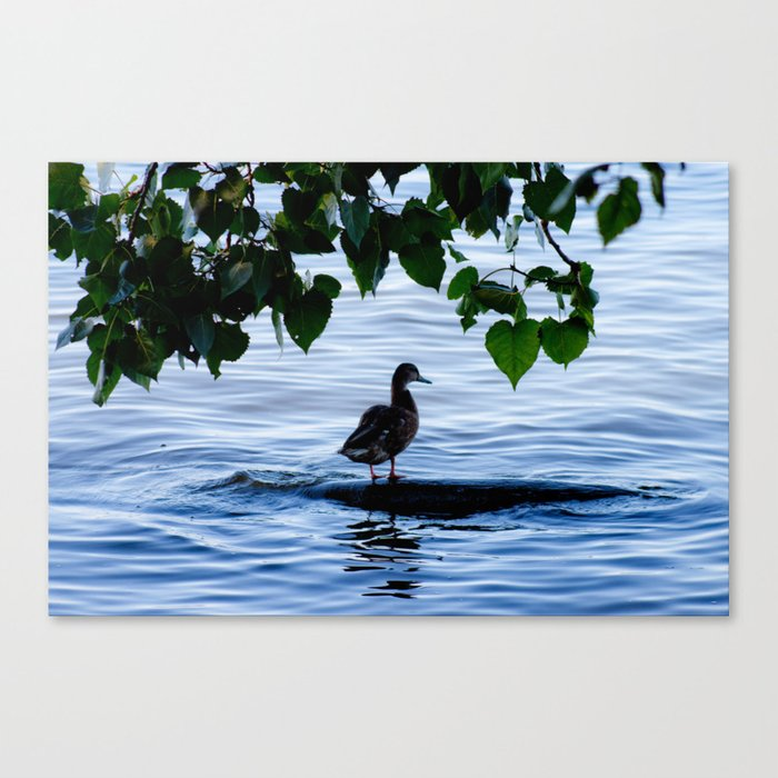 Alone in the sea - Photo Canvas Print