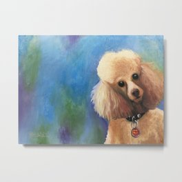 Teddy the (spoilt) Toy Poodle Metal Print