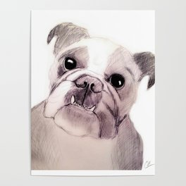 Bully Bull Dog Poster