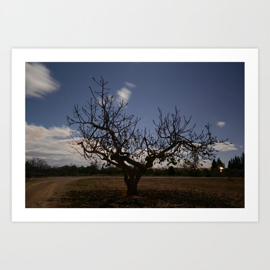 Ficus Carica Art Print