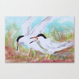 Seabirds - Terns Canvas Print