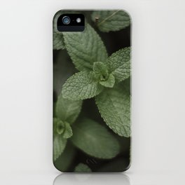 Mint at a desert farm in The Negev, Israel iPhone Case