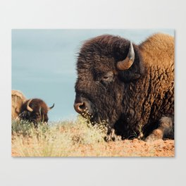 American Bison II Canvas Print