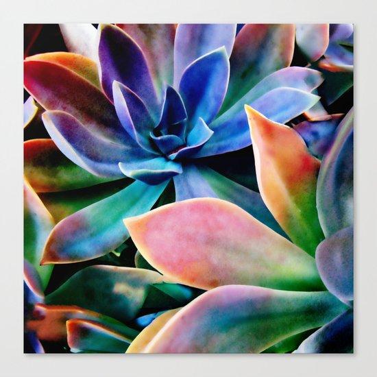 Spectacular Succulents 2 Canvas Print