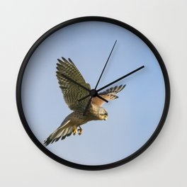 Kestrel Hovering Wall Clock