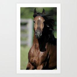 Horse Running Art Print