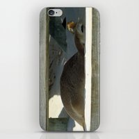 seal iPhone & iPod Skins featuring Seal by Mel Forshee