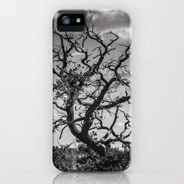 Ancient Tree, Survivor, Alive iPhone Case