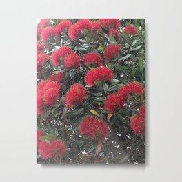 Pohutukawa, Kiwi Christmas tree Metal Print