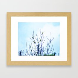 Goldfinches in a Tree Framed Art Print