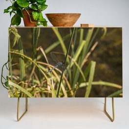 Dragonfly in the marsh Credenza