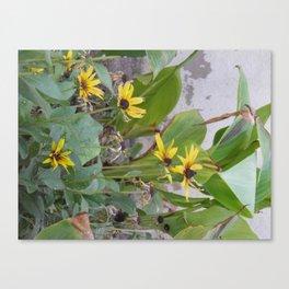 Sunshine Yellow- 1  Canvas Print