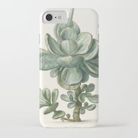 succulent iPhone & iPod Cases featuring Succulent by anipani