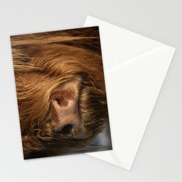 NOSEY HIGHLAND COW Stationery Cards