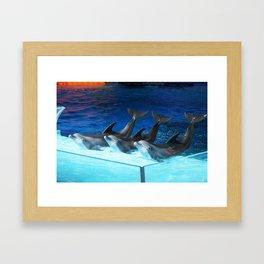 Dolphins Framed Art Print