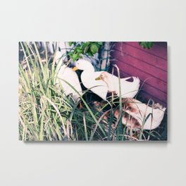 Tail Feathers Country Barn Print Metal Print