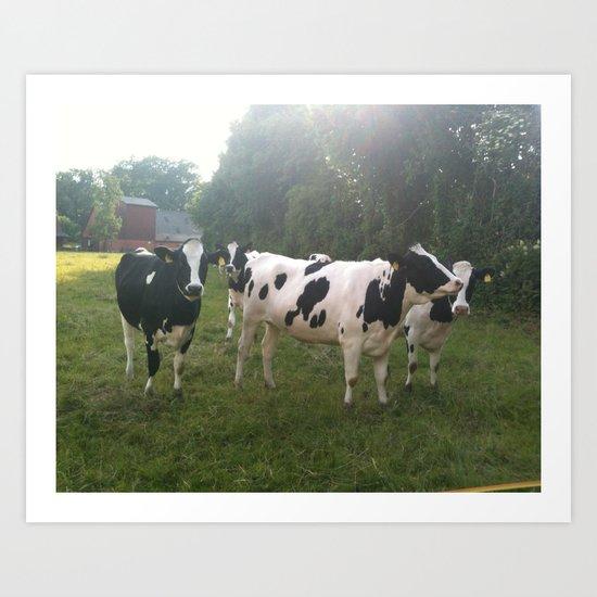 German Cows Art Print