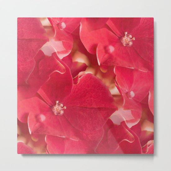 Red hydrangea flowers #decor #society6 Metal Print
