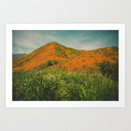 California Poppies 026 Art Print