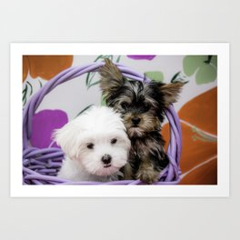 Maltese Puppy and a Yorkshire Terrier Puppy Cuddling in a Purple Basket with Flower Background Art Print