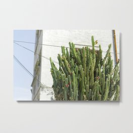 Large Cactus Photography Metal Print