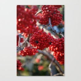 red berry tree Canvas Print