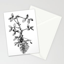 Peanut Stationery Cards