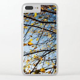 Birch Tree Photography Print Clear iPhone Case