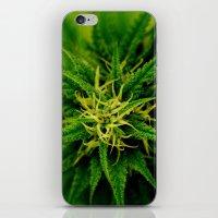 marijuana iPhone & iPod Skins featuring Marijuana by TilenHrovatic