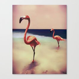 Flamingo beach Canvas Print